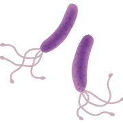 ピロリ菌(ヘリコバクター・ピロリ)